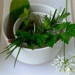 лечение целлюлита в домашних условиях фитотерапия